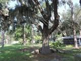 236 Camellia Road - Photo 32