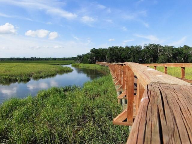 Marsh Hen Drive - Photo 1