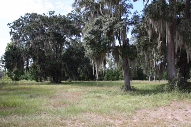239 Coopers Point, Shellman Bluff, GA 31331 (MLS #1585518) :: Coastal Georgia Living