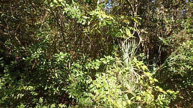 0 Wren Road, Kingsland, GA 31548 (MLS #1614749) :: Palmetto Realty Group