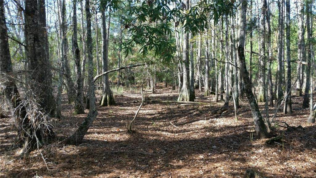 0 Ga Hwy 251 (66.65 Acres) - Photo 1