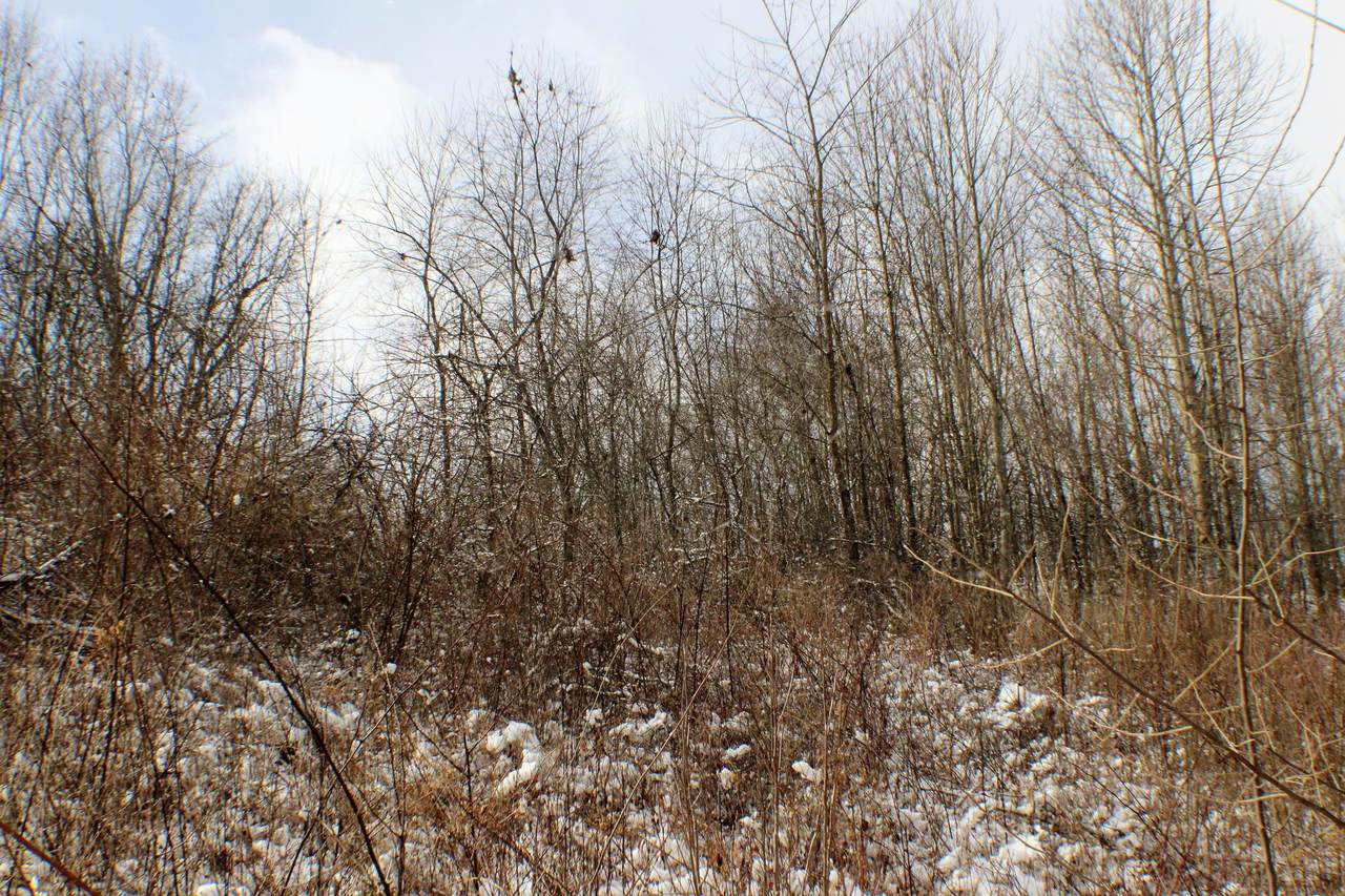 Locust Creek - Photo 1
