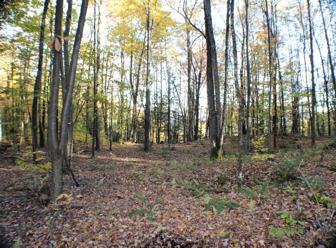 Spruce Flat Rd - Photo 1