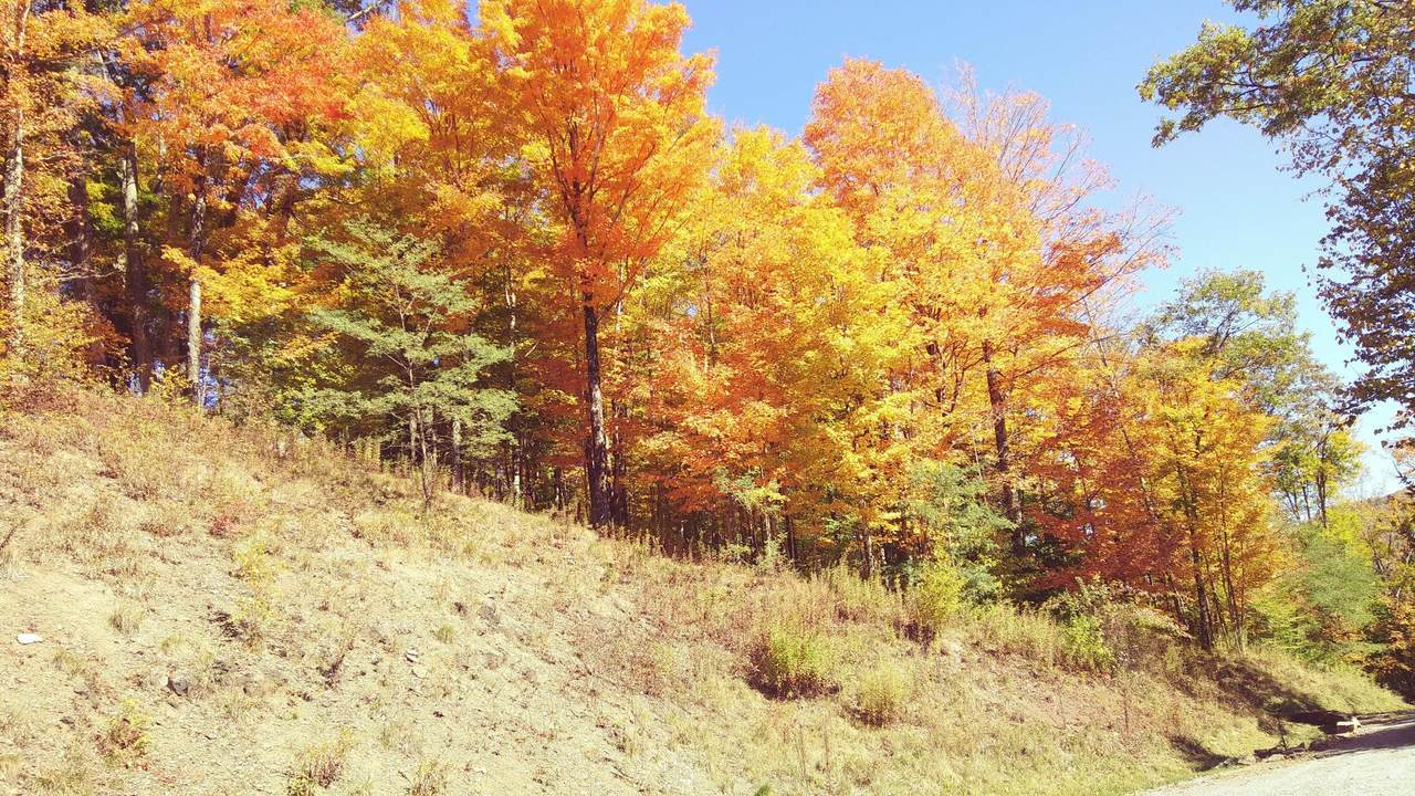 116 Northern Trail - Photo 1