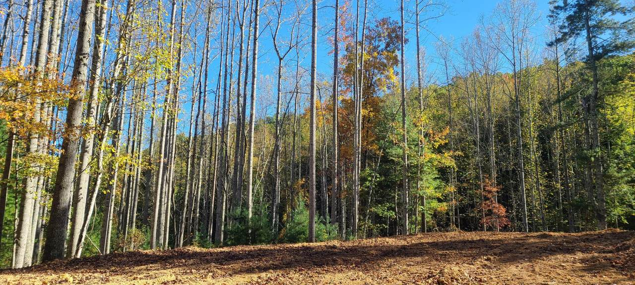 11 Acres Ellison Ridge Road - Photo 1