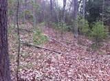 13197 Browns Creek Rd - Photo 2