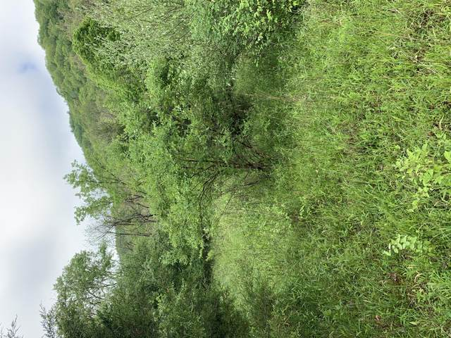 Rt 219 Lot, UNION, WV 24983 (MLS #20-1578) :: Greenbrier Real Estate Service
