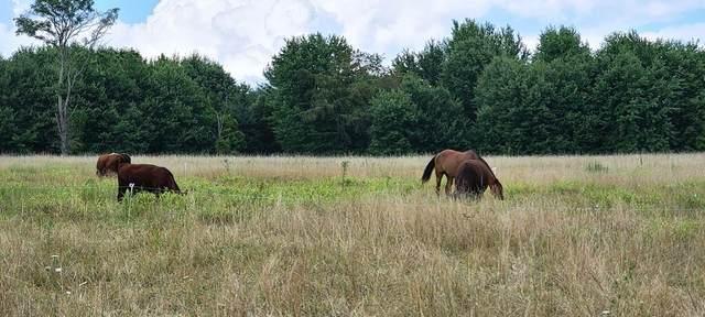 Little Stoney Creek, FOREST HILL, WV 24935 (MLS #21-1305) :: Greenbrier Real Estate Service