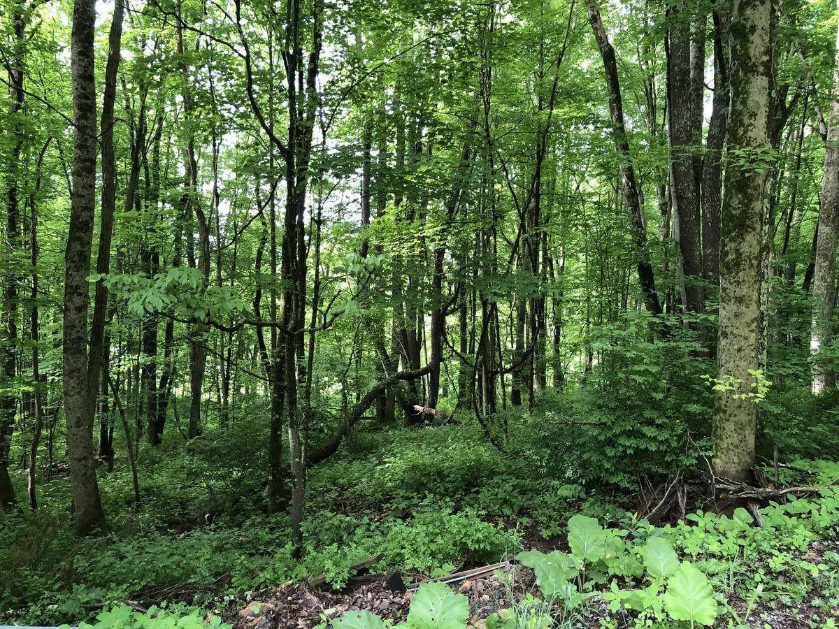 375 Mill Creek Road - Photo 1