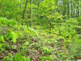 1 acre Pine Mountain Rd. - Photo 6