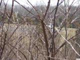 Par. 041.03 Old Newport Highway - Photo 16