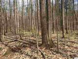 lot #2 Ownby Rd - Photo 7