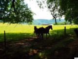 2426 & 2432 Dairy Road - Photo 11