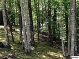 2141 Spence Mountain Loop - Photo 33
