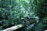 Bogard Creek Way - Photo 10