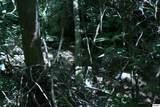 Bogard Creek Way - Photo 12