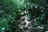 Bogard Creek Way - Photo 2