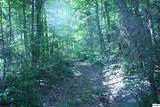 Bogard Creek Way - Photo 8