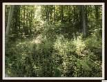 Lot Lonesome Pine Way - Photo 10