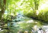 4371 Indian Camp Creek - Photo 3