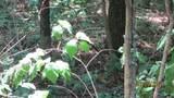 Bent Tree Lane - Photo 10