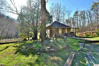 2503 Grassy Branch Rd, Sevierville, TN 37876 (#208657) :: Colonial Real Estate