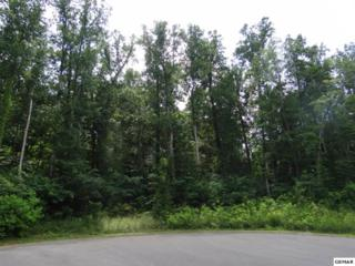 Lot 80 Muscadine Ct, Sevierville, TN 37876 (#208661) :: The Terrell Team
