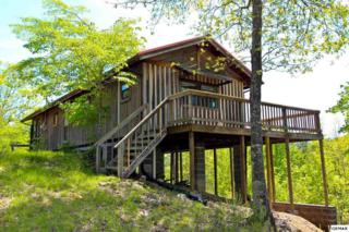 2990 Arch Rd, Cosby, TN 37722 (#209481) :: SMOKY's Real Estate LLC
