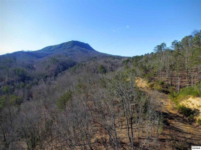 1630 Seagle Hollow Rd, Sevierville, TN 37876 (#201151) :: Billy Houston Group