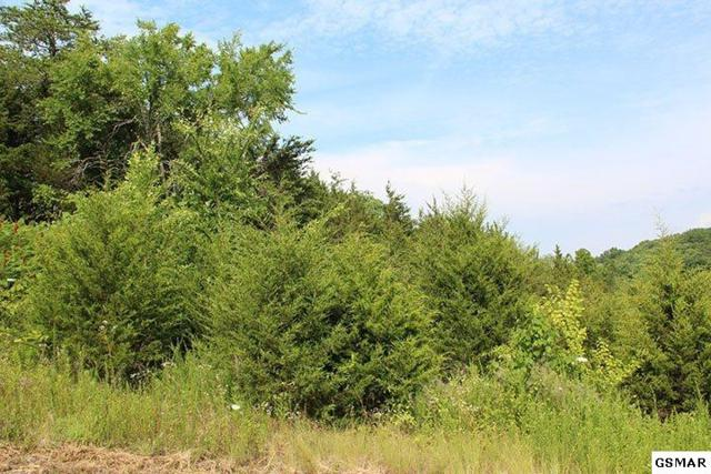 Lot 17 Harbor Point, Sevierville, TN 37876 (#204221) :: Colonial Real Estate