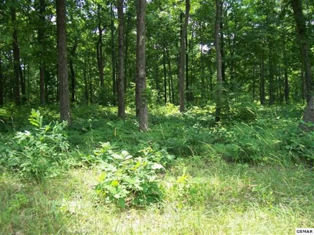 Lot 24 Tom Patterson Trail, Dandridge, TN 37725 (#207403) :: Billy Houston Group