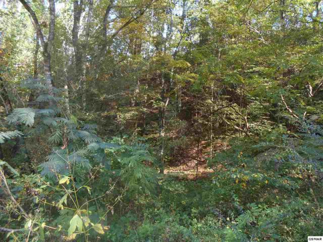 Lot 46 Velvet Dr Cove Hollow Rd, Cosby, TN 37722 (#212828) :: Billy Houston Group