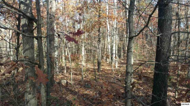 Lot 1 Critter Mountain Way, Newport, TN 37821 (#213296) :: Billy Houston Group