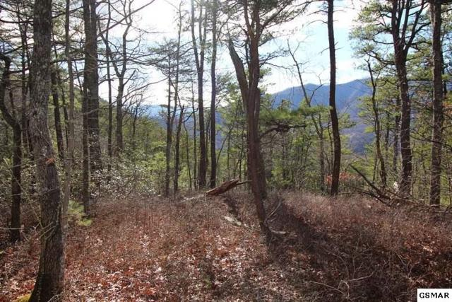 Lot 13 Little Mountain Way, Townsend, TN 37882 (#214212) :: Billy Houston Group