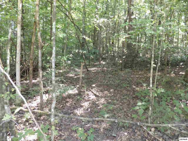 Par. 021 Deerfoot Road, Cosby, TN 37722 (#214286) :: The Terrell Team