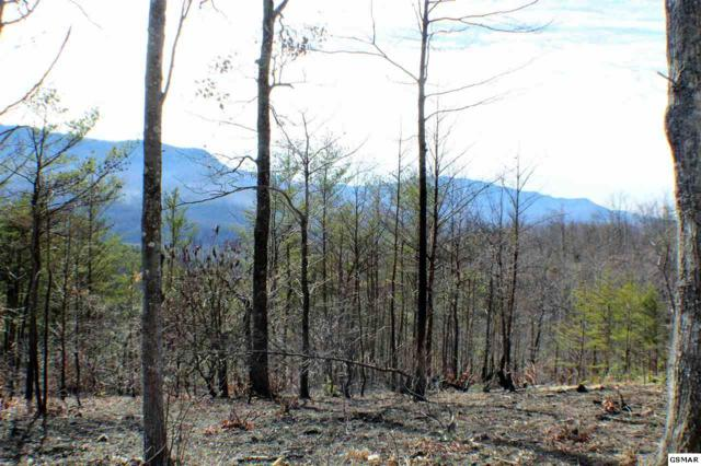 Lot 71 Vixen Run, Gatlinburg, TN 37738 (#214397) :: The Terrell Team