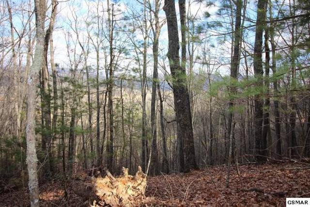Lot 12 Little Mtn. Way, Townsend, TN 37882 (#214636) :: Billy Houston Group