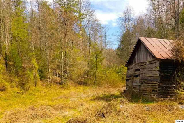 Tract 2 Bruce Ogle Way, Pigeon Forge, TN 37863 (#215031) :: Billy Houston Group