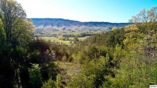 Lot 9 Clear View Dr, Newport, TN 37821 (#215949) :: Billy Houston Group