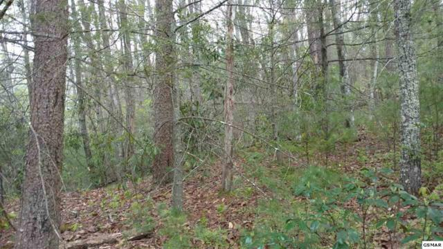 12 61 Acres Black Berry Mountain Way, Cosby, TN  (#216234) :: SMOKY's Real Estate LLC