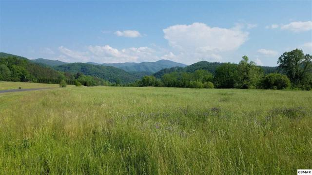Lot 10 River Rapids Way, Del Rio, TN 37727 (#216266) :: Billy Houston Group