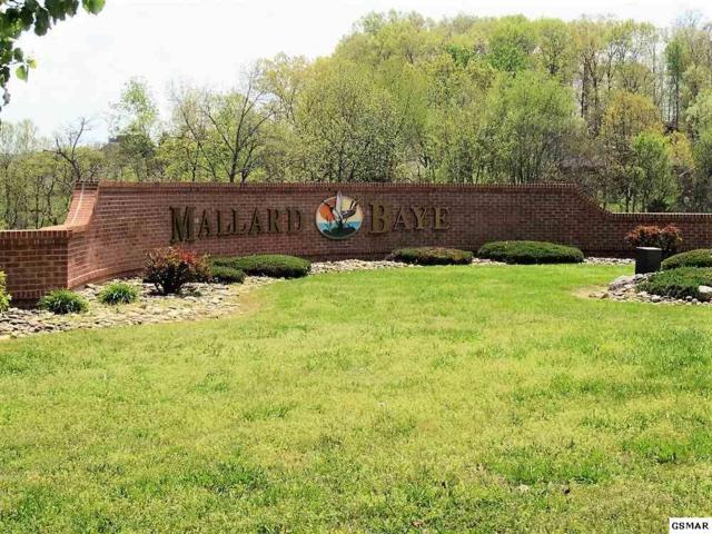 Mallard Baye, Rutledge, TN 37861 (#216416) :: Four Seasons Realty, Inc