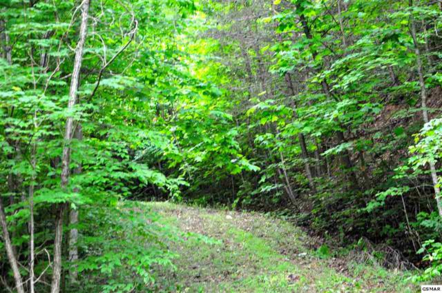 Greystone Way, Lot 44R, Townsend, TN 37882 (#216495) :: Billy Houston Group