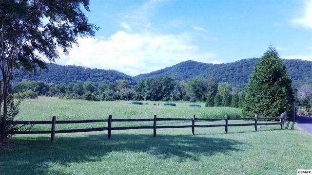 Lot 137 River Rapids Way, Del Rio, TN 37727 (#216980) :: Four Seasons Realty, Inc