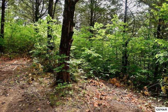 Kenny Fox Way, Sevierville, TN 37876 (#217104) :: Colonial Real Estate