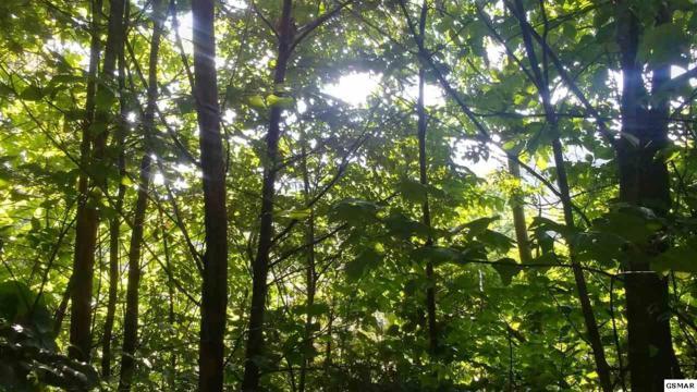 Lot 20 Wild Azalea Ln, Sevierville, TN 37862 (#217260) :: Billy Houston Group