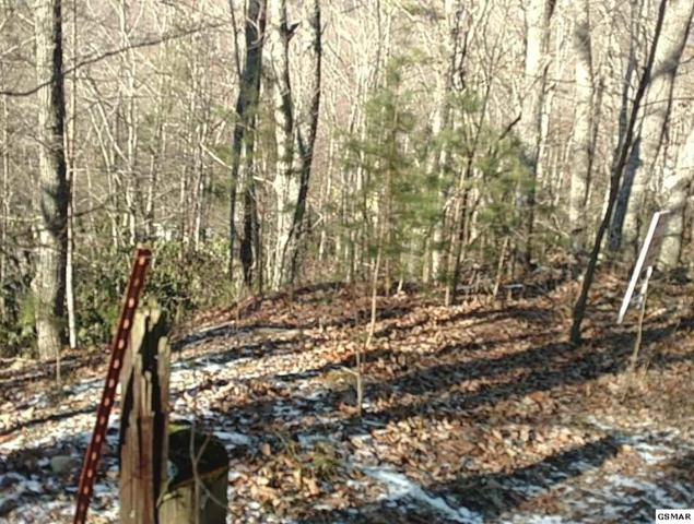 Lot 19 Black Oak Dr, Sevierville, TN 37876 (#217271) :: Billy Houston Group