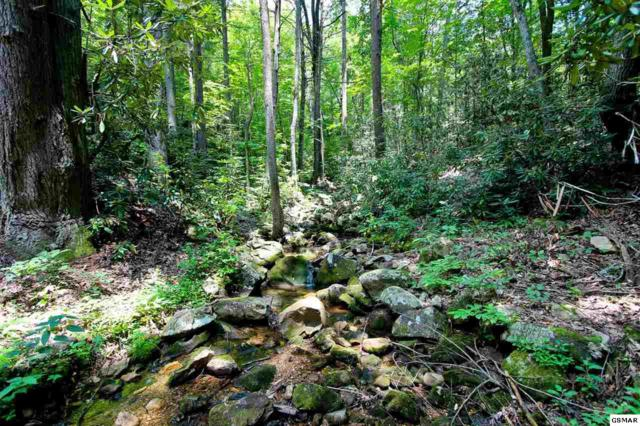 LOT 7 Tomahawk Drive, Cosby, TN 37722 (#217526) :: Billy Houston Group
