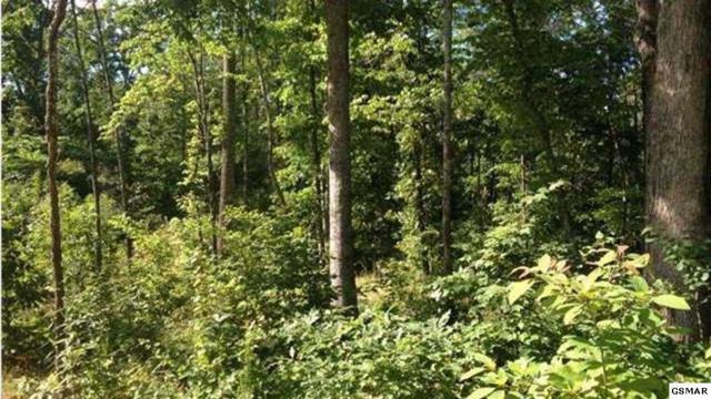 1171 Pine Mountain Rd, Sevierville, TN 37862 (#217553) :: Billy Houston Group