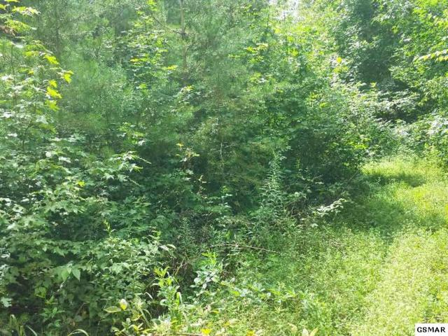 Lot 28 Sulpher Springs Way, Sevierville, TN 37876 (#217563) :: Billy Houston Group